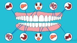 Os dentes e outros órgãos